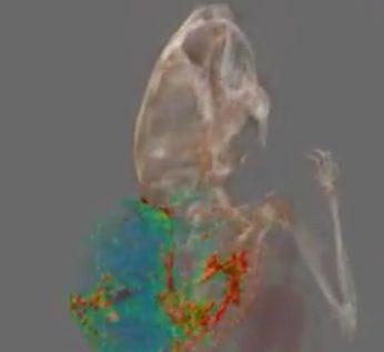 Imaging Pharmacokinetics- image of tumor on mouse