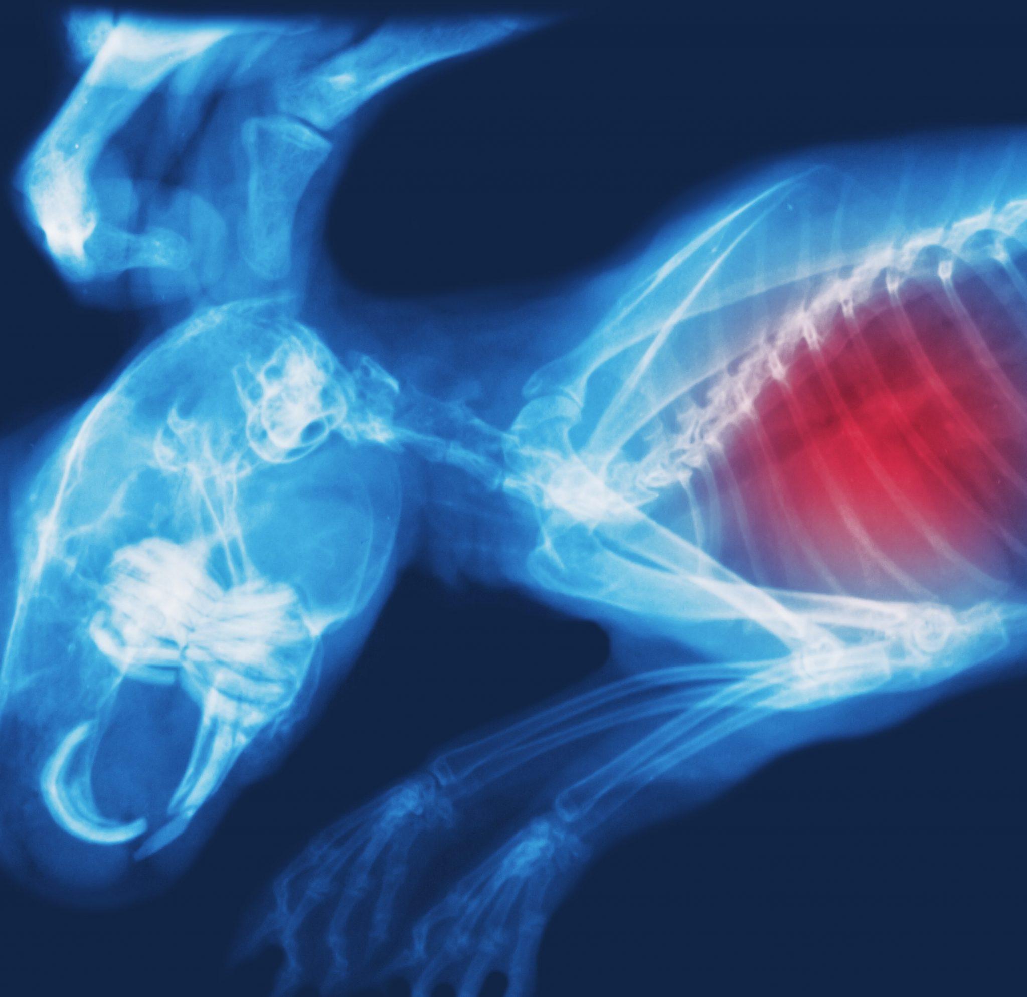 molecular imaging in toxicology studies
