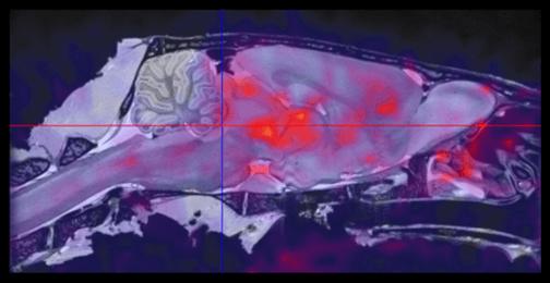 Rat Brain CFN. Molecular Imaging Study