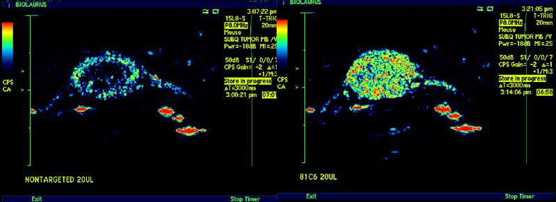 TN targeted microbubble localization in 786-0 tumor xenograft (untargeted left panel, tenascin targeted min right panel)